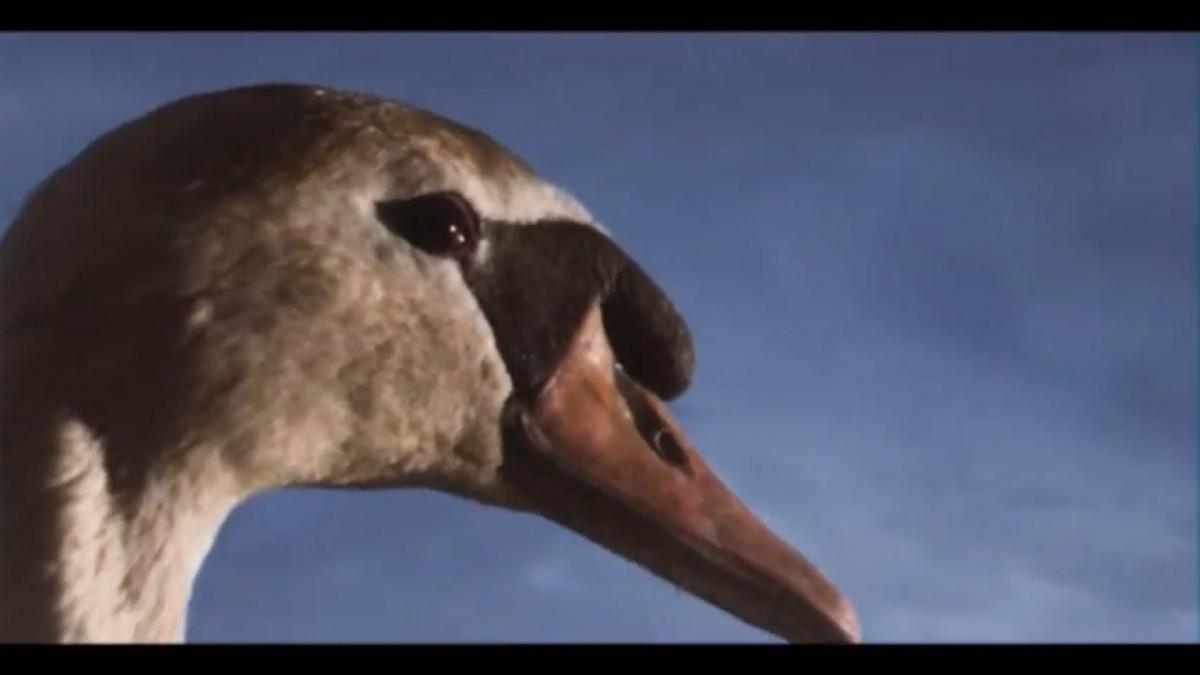 Third Swan